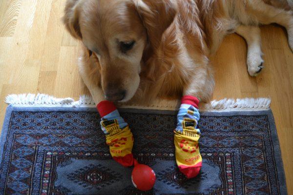 Noel wearing Canvas Socks